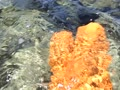 (2017.07.20)「大神島の天然露天風呂」の巻