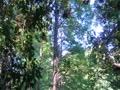 篠栗九大の森の落羽松パート2
