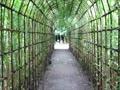 萩のトンネル.